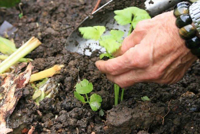 農作物の品質を向上させる