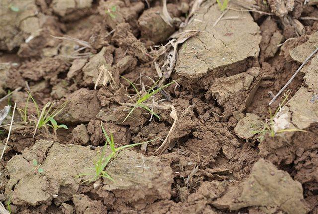 土壌の硬化