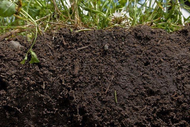 土壌改良材の役割