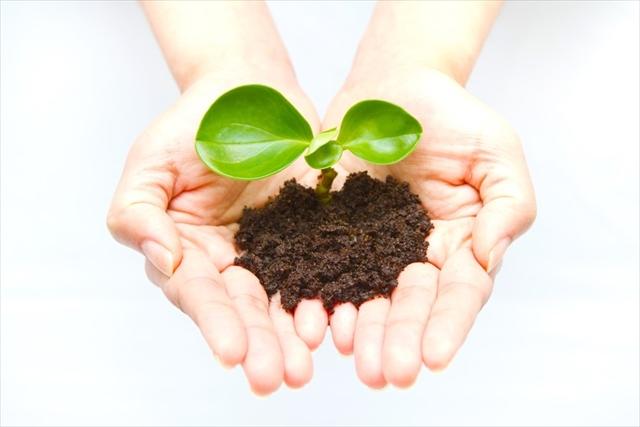 緑化資材の販売を行う株式会社カクタニは緑化・環境資材のベストパートナー