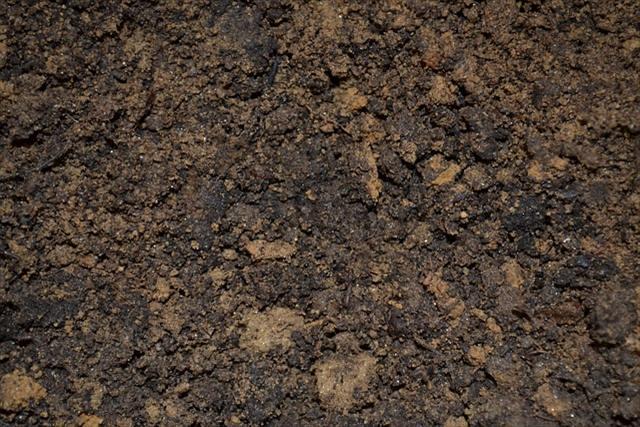 腐葉土と堆肥(コンポスト)の違いとは