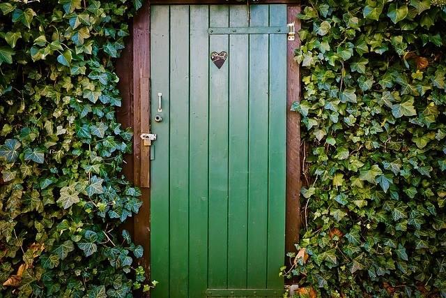 緑化システムで用いられることの多い「ヘデラ」の魅力~壁面の緑化に~