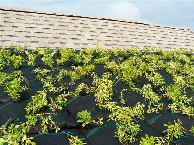 屋上を緑化して癒されよう