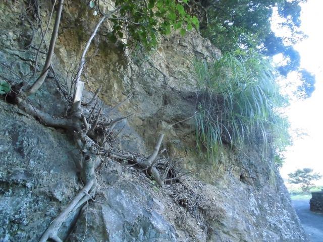 法面緑化で侵食防止!落石や崩落を防ぐ