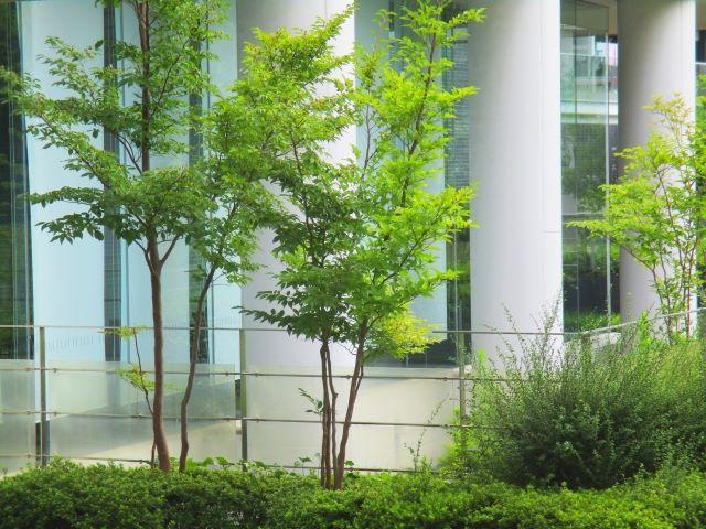 法面緑化に必要な製品を販売している【株式会社カクタニ】~雑草の種子を含まない植生基盤材~