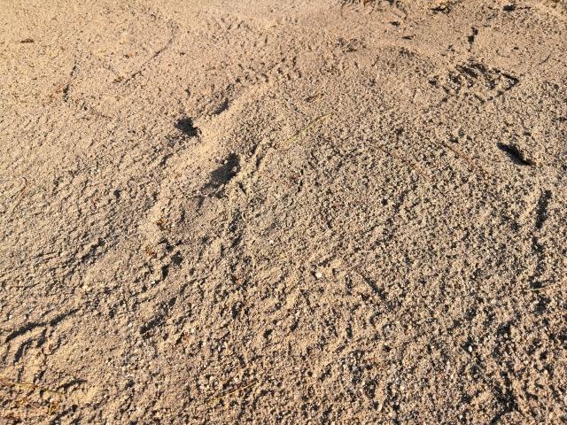 土壌の生態系が崩れている