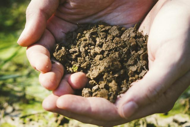 土壌改良材の種類とそれぞれの特徴
