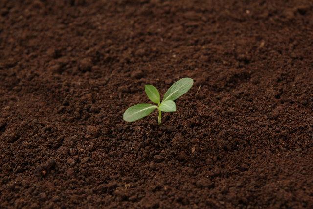 土壌改良材を使用するメリット