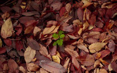 醗酵促進剤で腐葉土作りを検討中なら…数々の緑化資材を販売する株式会社カクタニ~腐葉土と堆肥の違い~