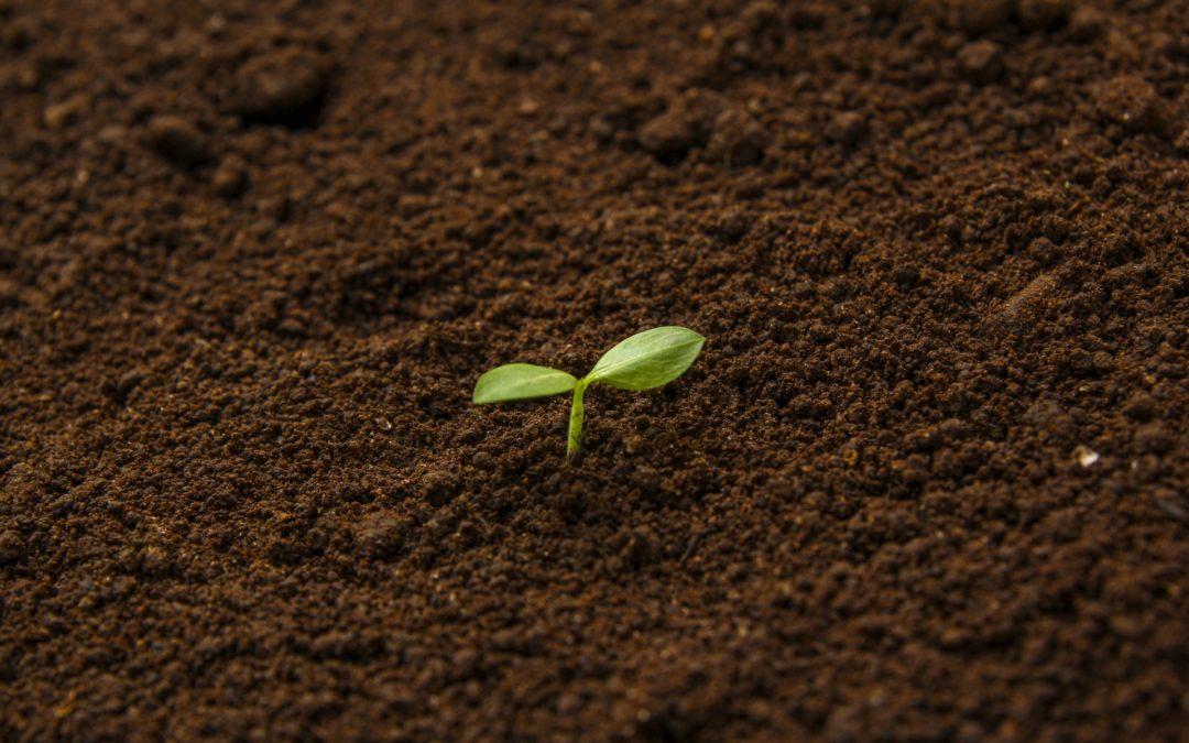 -土壌改良をする前の基礎知識- 植物の成長に欠かせない3大栄養素の特徴! これらが不足すると食物はどうなる?
