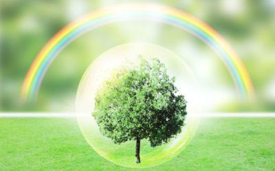緑化資材の通販なら工事用・園芸用・駐車場用などを揃える株式会社カクタニにお任せ~緑化資材を企業のブランディングに活用~