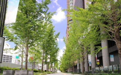 移植する樹木によって変わる!地下支柱の設置方法とは